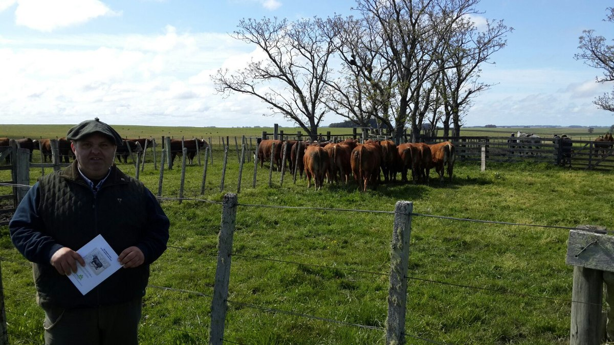 cliente busca comprar campo agri ganadero de 1.000 ha al sur