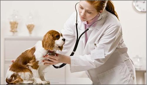 clinica veterinaria stgo.- centro