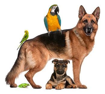 clinica veterinaria y servicio a domicilio