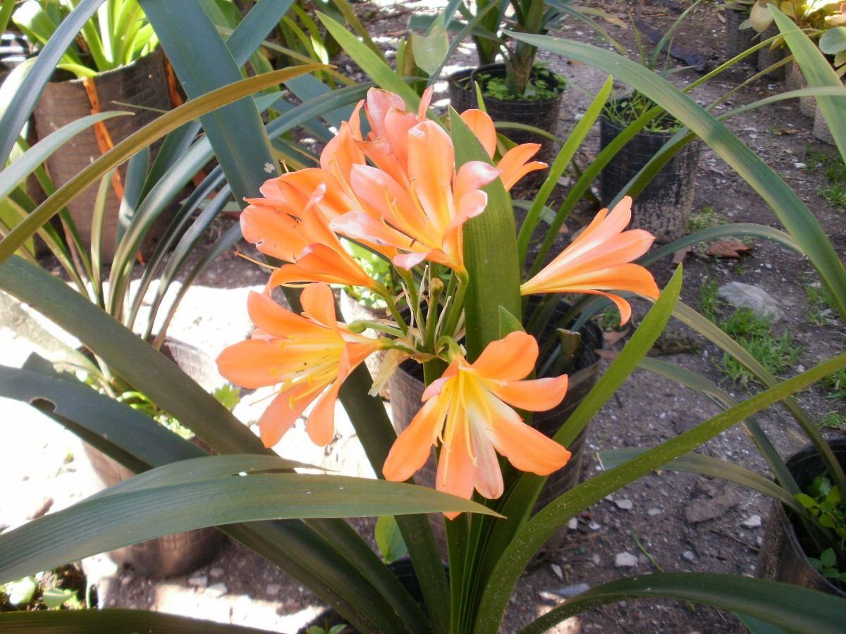 Fotos Preciosas De Flores. Preciosas Flores De Seda Ramo