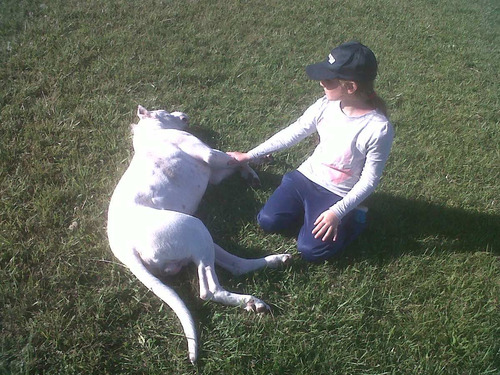 club de campo canino - razas grandes - tomamos  pit bull