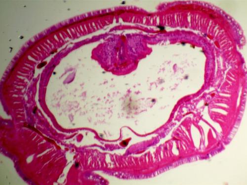 câmera usb para microscópio trinocular - 3.1 mpixels