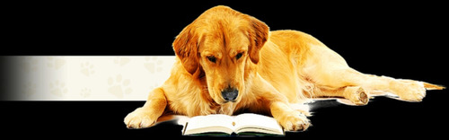 cão : aprenda ser um lider