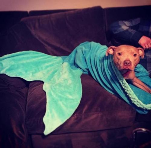 cobertor de sereia /tubarão adulto pronta entrega! promoção