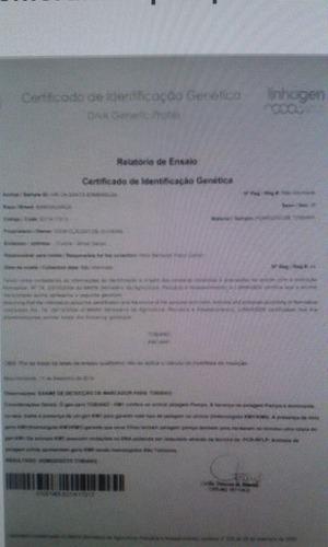 cobertura de garanhão pampa homozigoto reg. abccmm