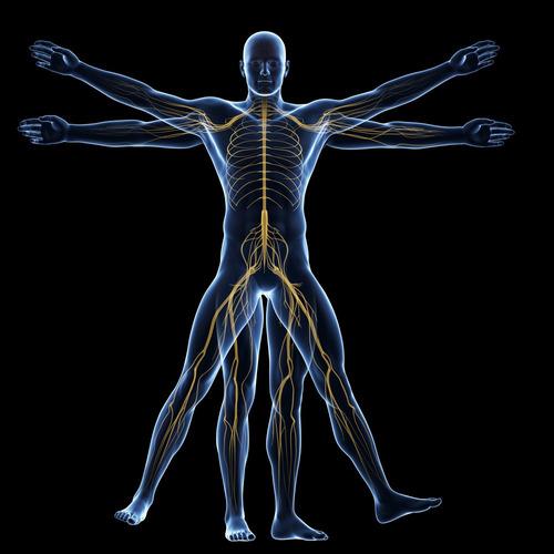 [cod. 036] bienestar - conozca la anatomía humana