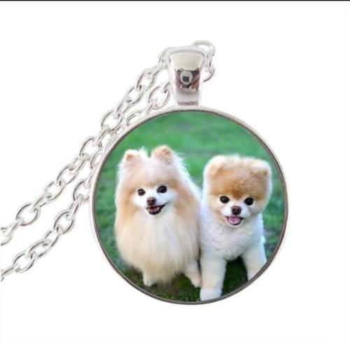 colar cão lulu