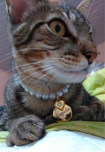 colar coleira de pérolas gatos/cães -plaquinha gravada
