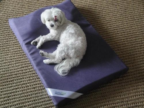 colchão cão viscoelástico nasa gel raça pequena cor uva