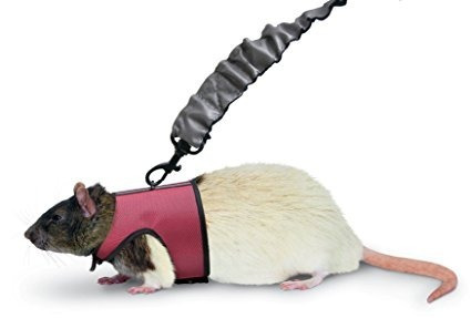 coleira para hamster