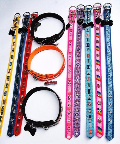 coleiras p/ cães médio 12pçs +12 placas ( somos fabricante)