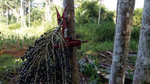 colheitadeira dos cachos de açaí trajano - kit c/ 08 hastes