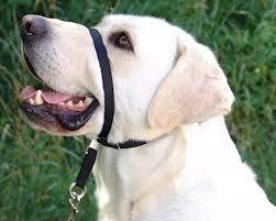 collar antijalones para perros estilo gentle leader