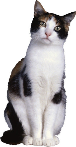 collar antipulgas gatos