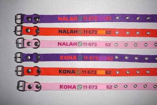 collar bordado personalizado en 2 cm de ancho pet id