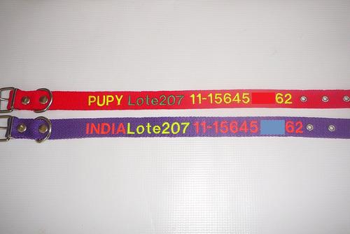 collar bordado personalizado en 2,5 cm de ancho pet id
