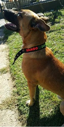 collar bordado personalizado hebilla especial 3 cm pet id