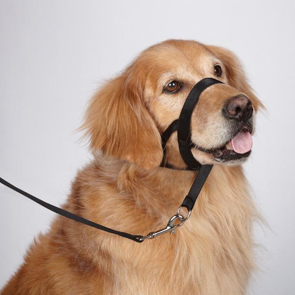 El Perro Dog Collars
