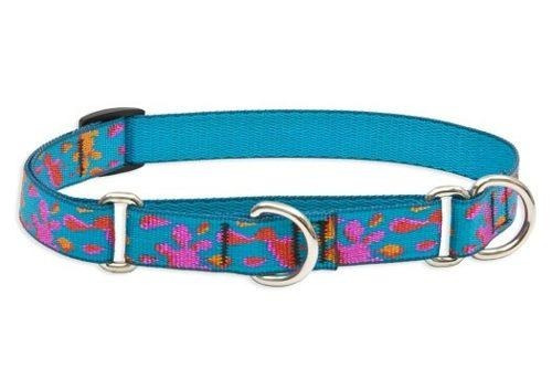 collar de castigo tipo martingale perros medianos 3/4 lupine