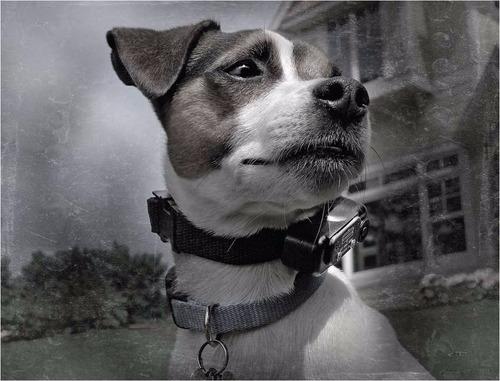 collar electronico de entrenamiento perro sportdog