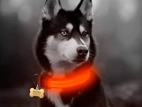 collar led luminoso con bateria en poliester perros y gatos