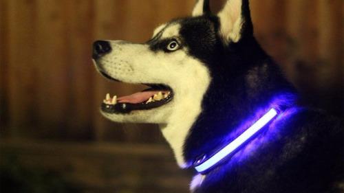 collar led para mascota azul