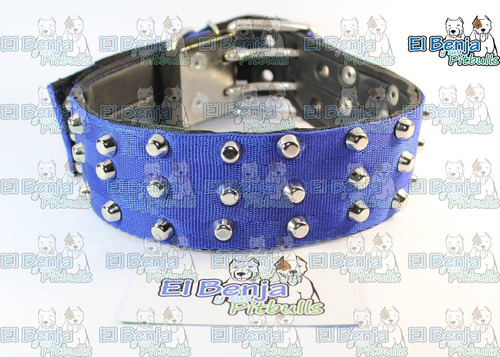collar para pitbulls estoperoles 2