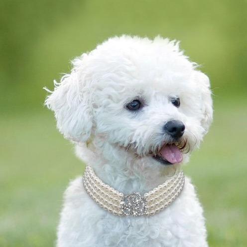 collar perlas e imitacion diamante envio gratis