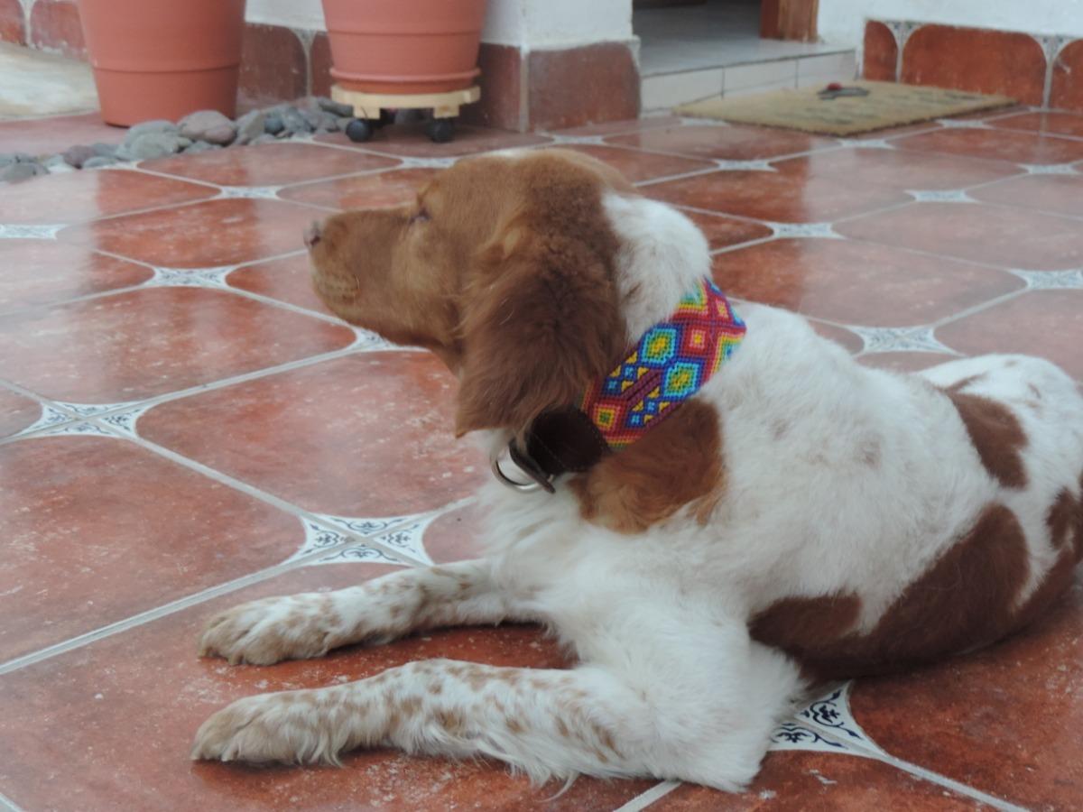 e03f0c18ae3e collar tejido chiapaneco para perros talla l ultimos modelos. Cargando zoom.