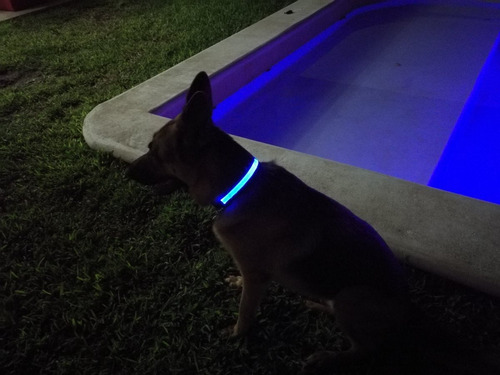 collares led para mascota recargables