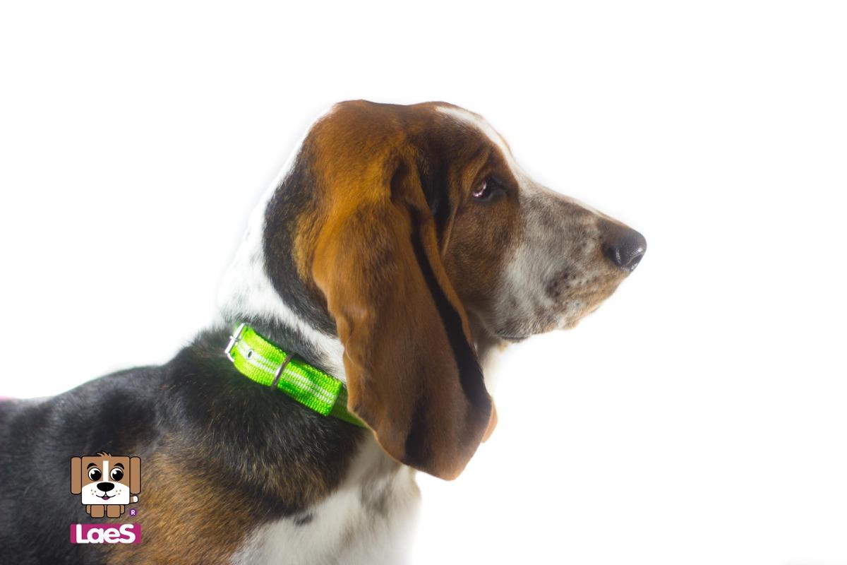 Collares para perro chico y mediano en mercado libre for Collares para perros