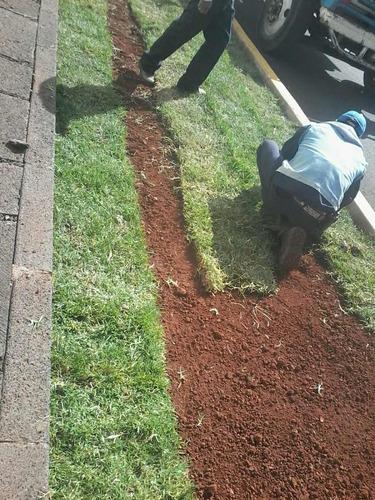 colocación de pasto en rollo y diseño d jardines