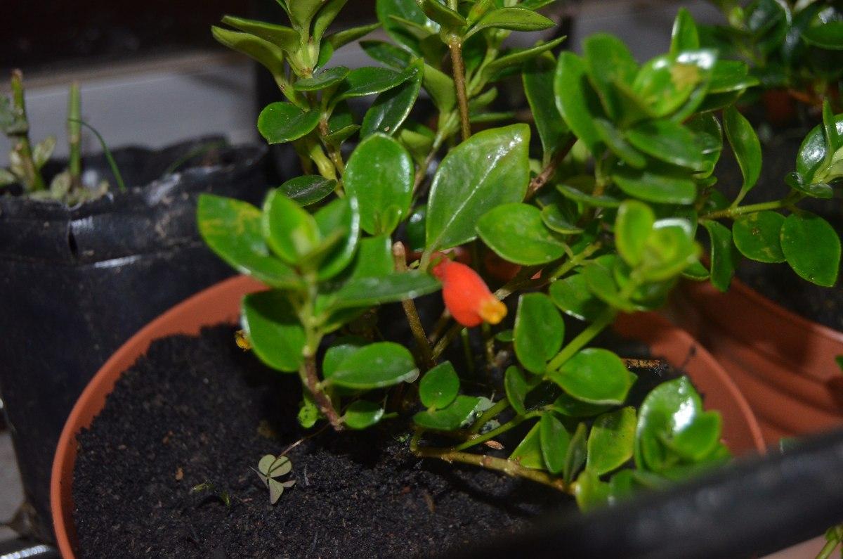 Plantas Colgantes De Interior Plantas De Interior Que