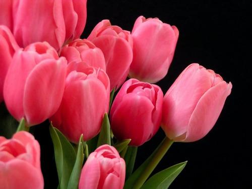 combo de bulbos de tulipanes exoticos x 4 bulbos-semilllas