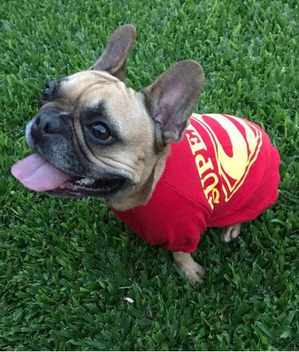combo de buzos para mascotas/perros venta mayorista