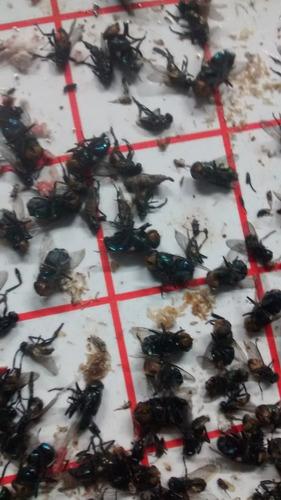 combo x 2 trampa de luz uv mata insectos. atrapa moscas 50m