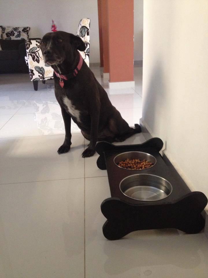Comedero para perros grande de lujo acero inoxidable for Comederos para perros