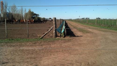 comederos de lona para ganado vacuno feed lots. lonasalex.