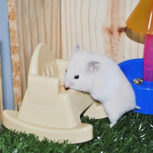 comedouro p/hamster poltrona