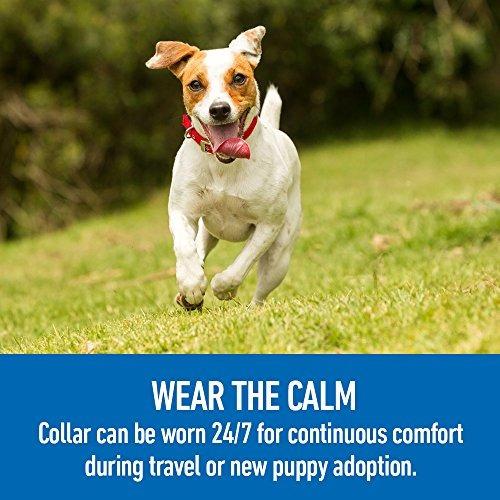comfort zone collar adaptil, perros pequeños, 1 paquete, pa