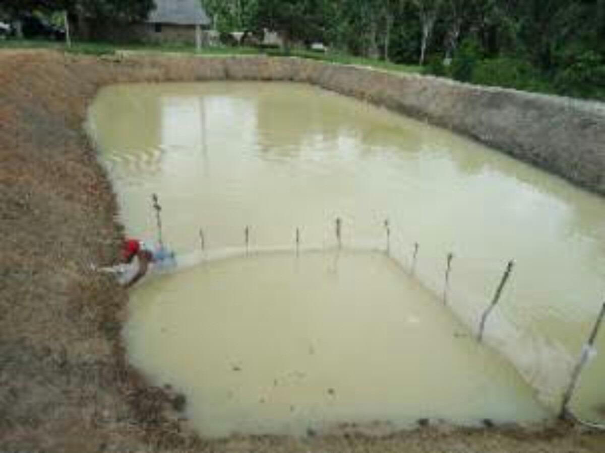 Como criar tilapia em tanque de terra r 12 00 em for Como criar tilapias