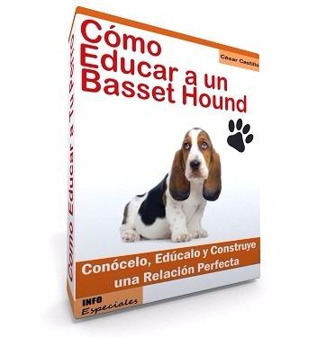 cómo educar a un basset hound entrenamiento de perros!!!