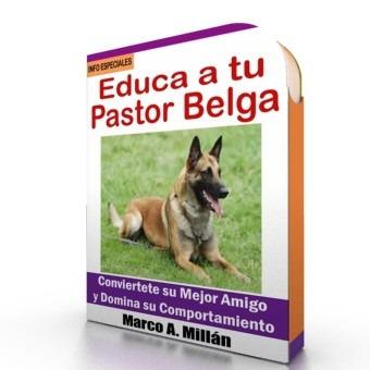 como educar a un pastor belga - guía de adiestramiento raza