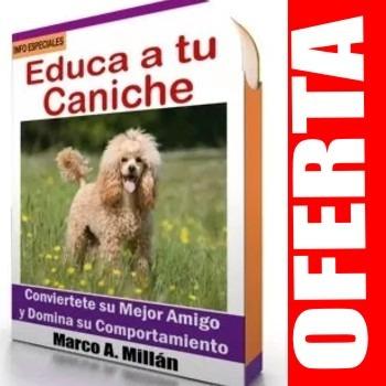 como educar a un perro caniche - guía de adiestramiento 2