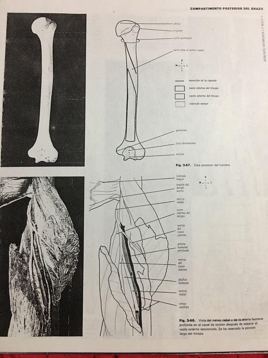 Compendio De Anatomía Humana - $ 280,00 en Mercado Libre