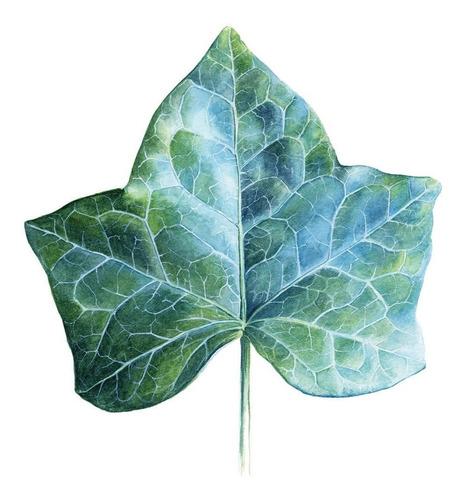 composición 5 piezas hojas , tipo acuarela cuadro decorativo