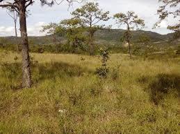 compre agora seu terreno por r$25.000,00. 036