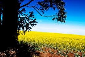 compre o seu terreno  próximo araçoiaba da serra 002