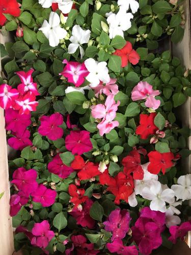 con flores alegría hogar