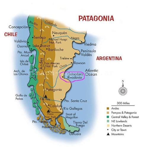 concha de caracol gigante o guarura 21×12cm. de la patagonia